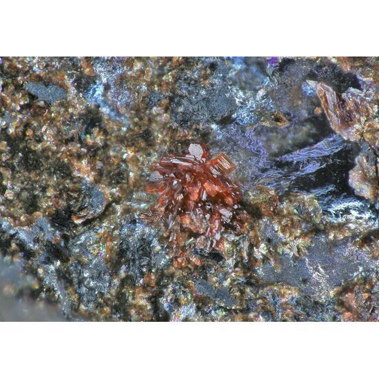 Coralloite & Wallkilldellite