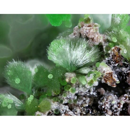 Attikaite Arsenocrandallite Olivenite & Conichalcite