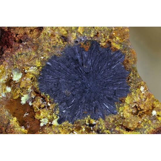 Billietite & Uraninite Psm Uranophane
