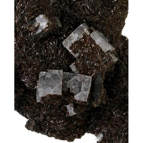 Siderite & Fluorite