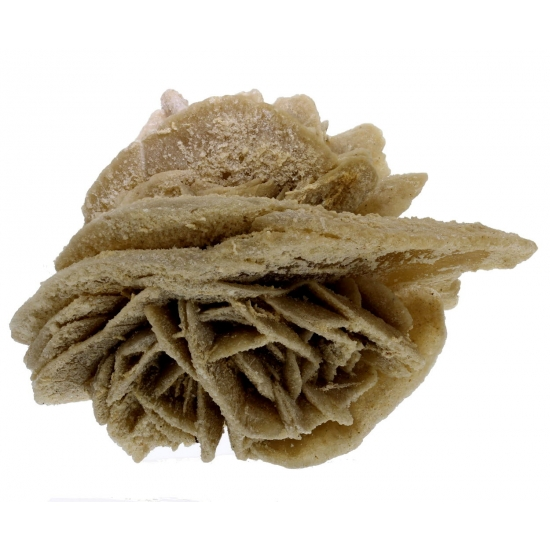 Desert Rose