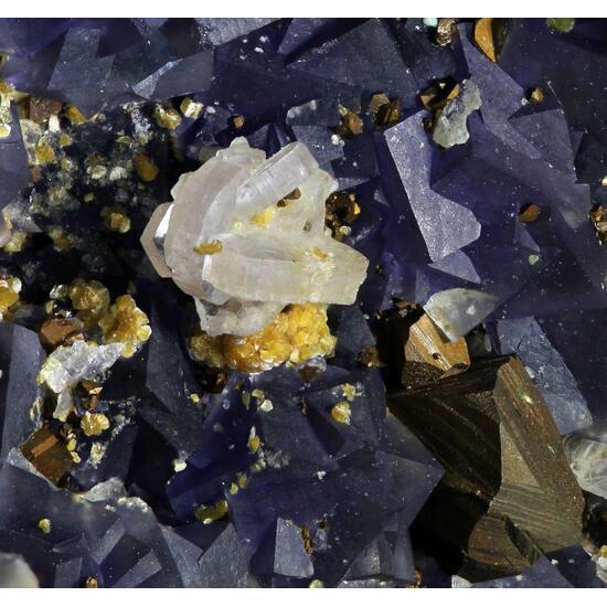 Fluorapatite Chalcopyrite & Gilbertite On Fluorite