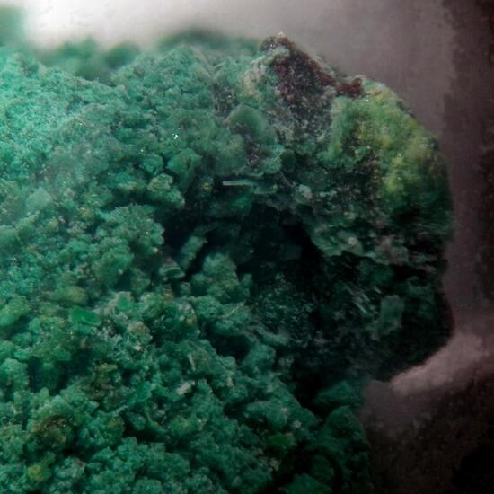 Belloite Psm Melanothallite