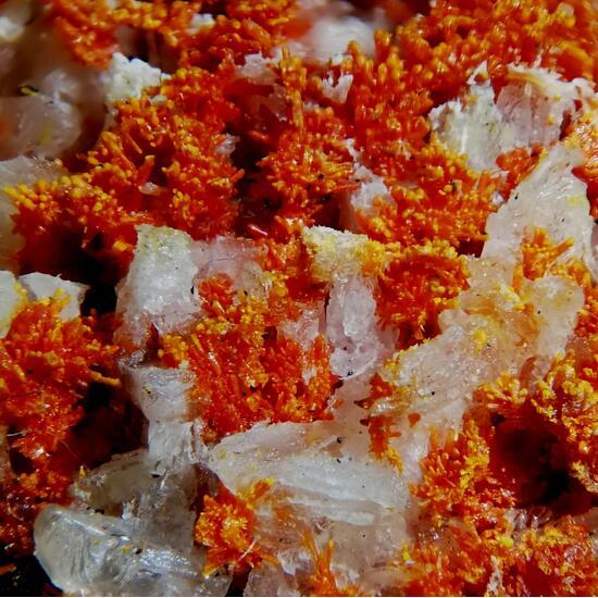 Arsenolite & Realgar