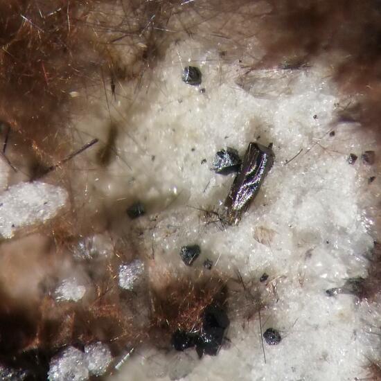Ferro-fluoro-edenite