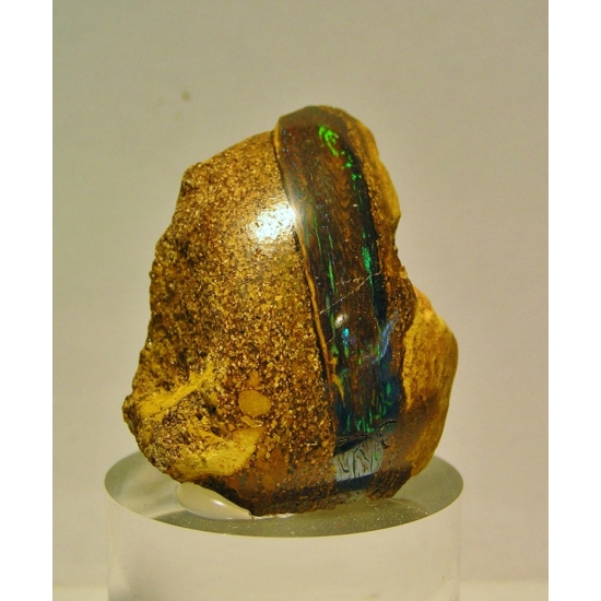 Precious Opal Psm Fossil Wood